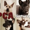 SPCA Homing Animal Portraits