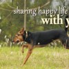 Sharing happy life with you…