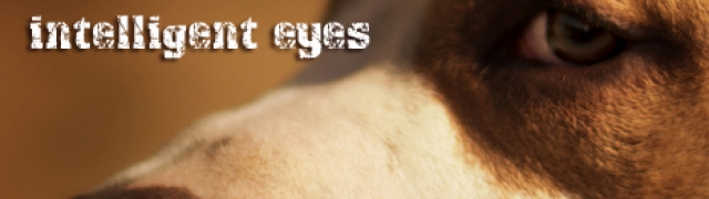 The Fascinating Dogs- intelligent eyes